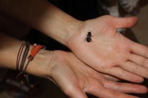 BPMiG Radkow pszczoly przedszkolaki Misie Radkow 32