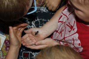 BPMiG Radkow pszczoly przedszkolaki Misie Radkow 34