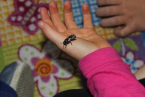 BPMiG Radkow pszczoly przedszkolaki Sloneczka Radkow 33