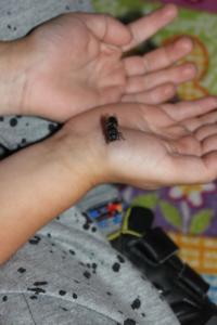 BPMiG Radkow pszczoly przedszkolaki Sloneczka Radkow 34