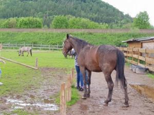 BPMiG Radkow konie F1 Scinawka Gorna28