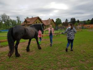 BPMiG Radkow konie F1 Scinawka Gorna57