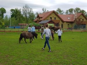 BPMiG Radkow konie F1 Scinawka Gorna59