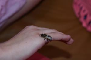 BPMiGRadkow Pszczoly Scinawka Dolna00044